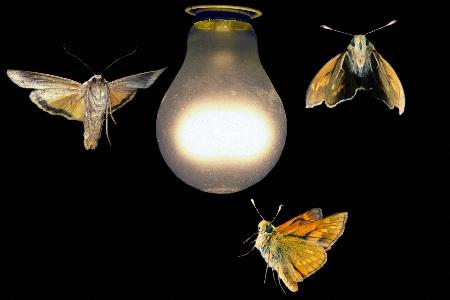 бабочки летят на свет1