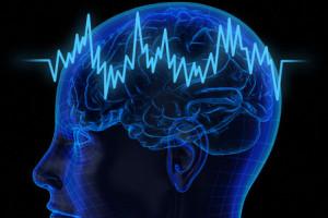 2развитие мозга