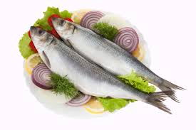 морская рыба1