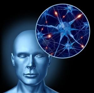 нервная система3