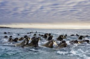 сезонная миграция животных4