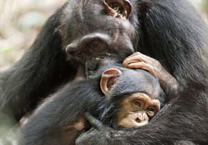нравственность животных2