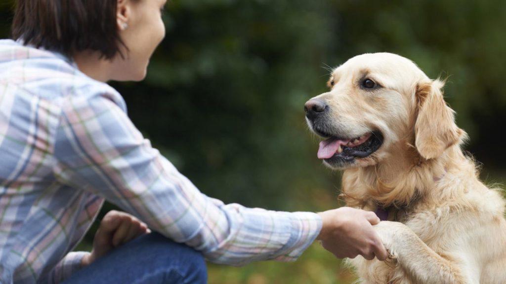Действительно ли собаки более дружелюбны1